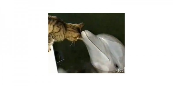 Кот и дельфины