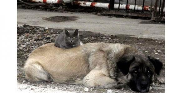 Кот и овчарка