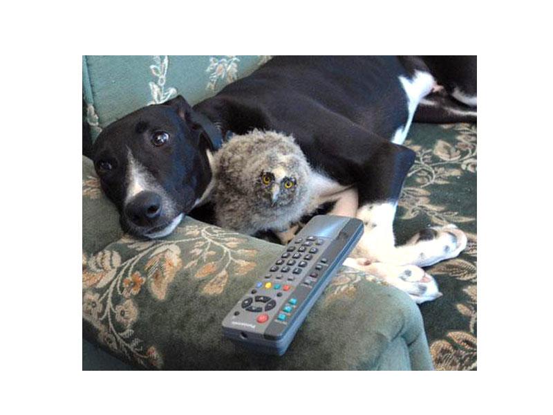 Сова и пёс