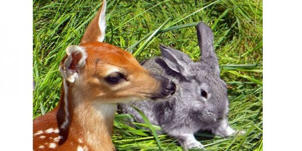 Маленькая косуля и кролик