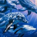 Интеллект дельфинов
