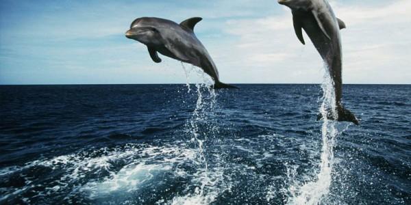 Дельфины умные и добрые