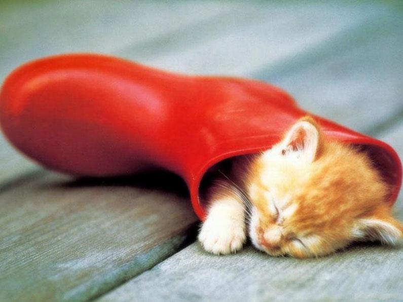 Котята умеют спать