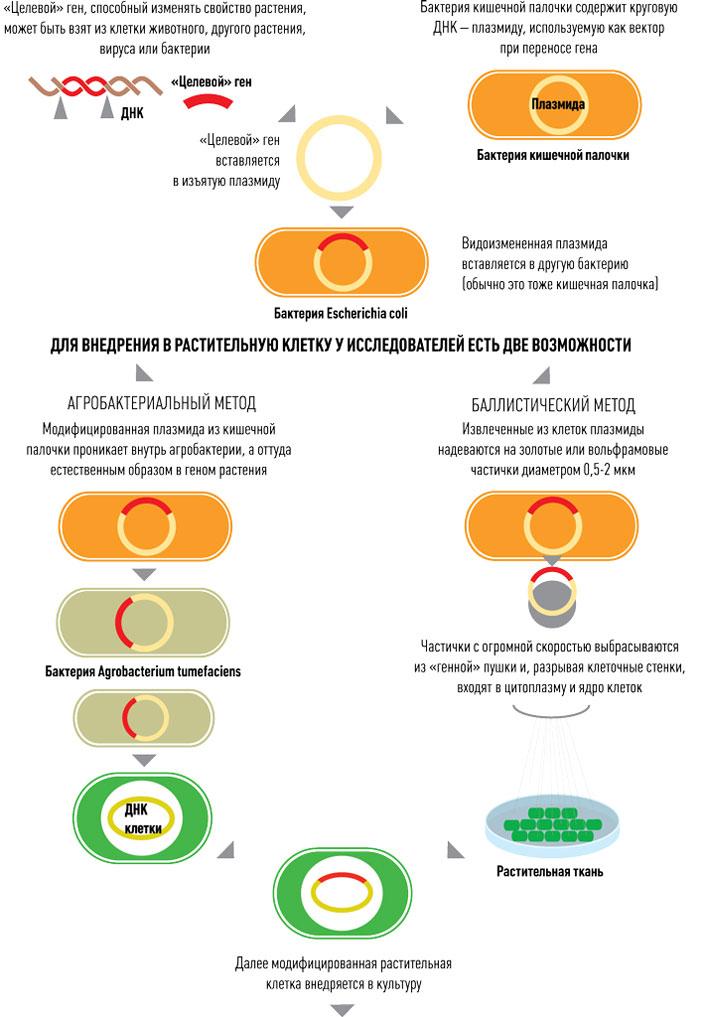 Способы внедрения гена в растительную клетку