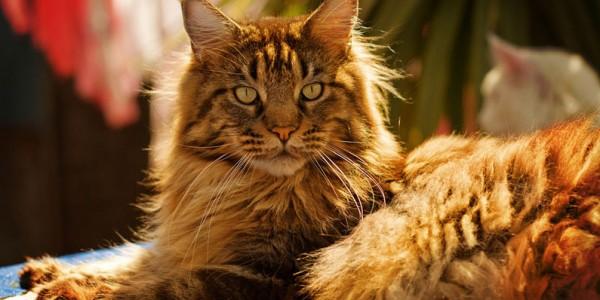 Кошачий, существо разумное