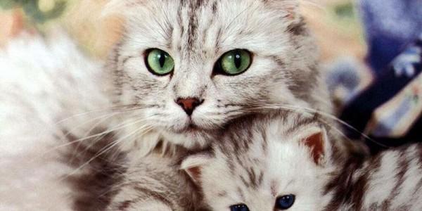 Супер кошки