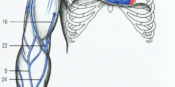 Венозная система руки