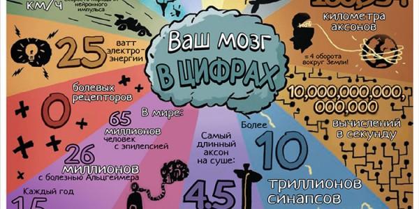 Мозг - Инфографика