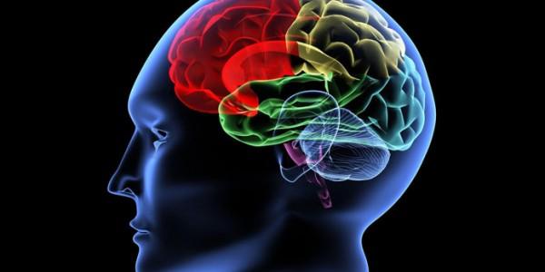 Области мозга
