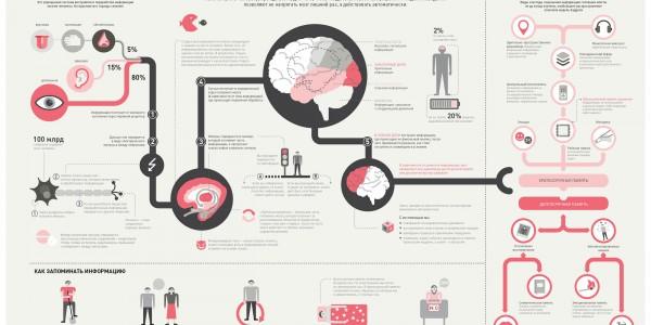Как мозг усваивает, запоминает и хранит информацию