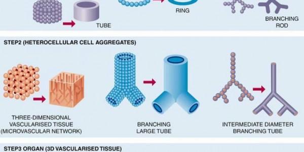 3Д печать тканей организма