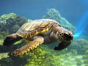 Животные долгожители планеты: список