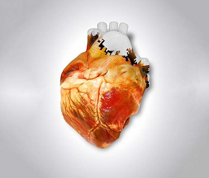 Напечатать сердце