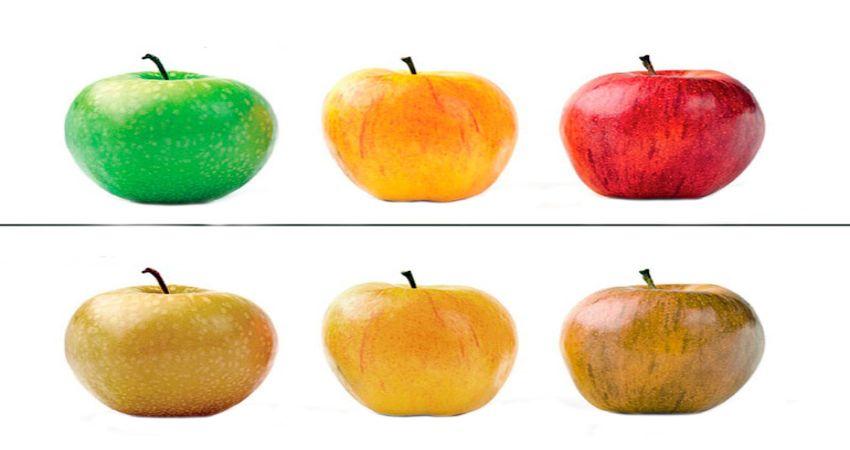 Дальтонизм – нарушение неправильным восприятием цветов